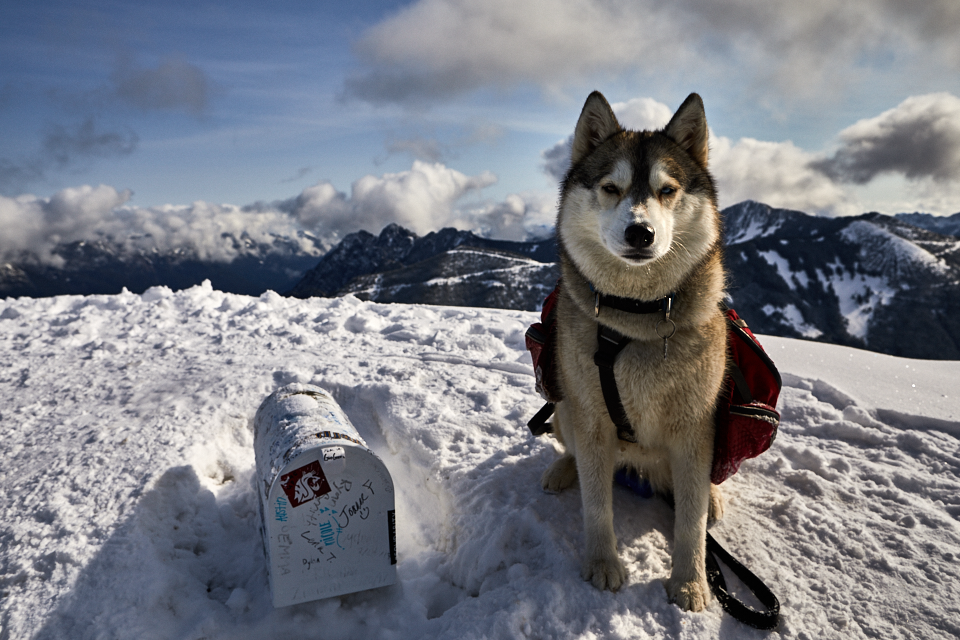 adrian-collier-fin-the-siberian-husky-mailbox-peak-01-170409.png