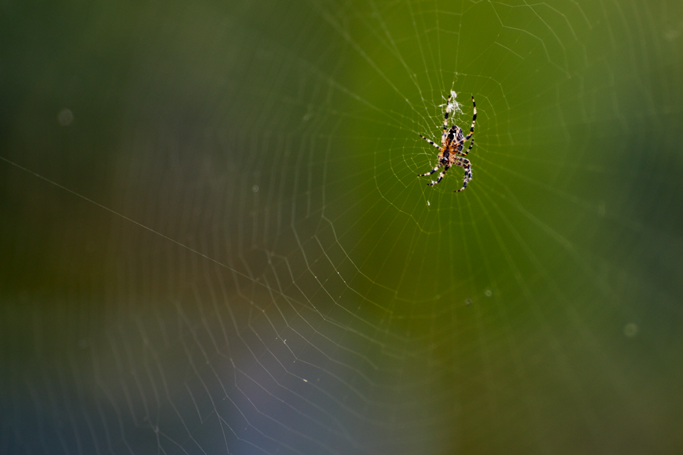 adrian-collier-spider-web-160926.png